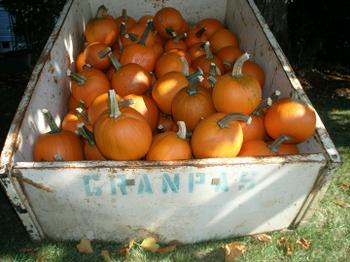 Grandpas_pumpkins