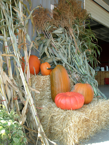 Hay_and_gourds