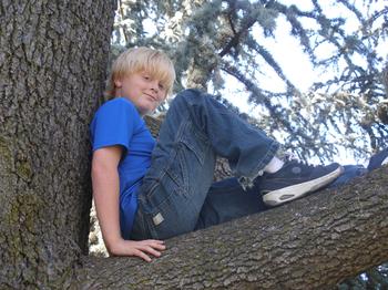 Jake_tree_1
