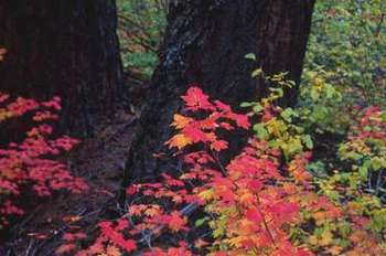Leaves2_2